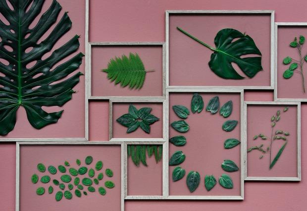 frame-leaves-pink